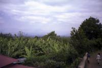 Banana trees and a hazy view
