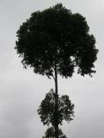 A tree...
