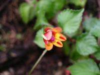 A 'geoff being arty'ed flower