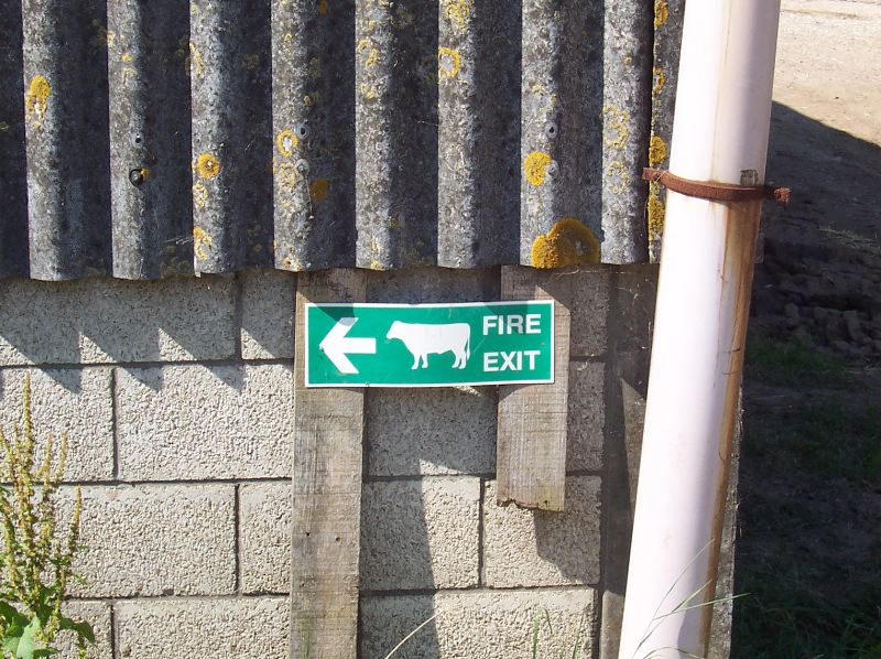 Fire exit for cows!